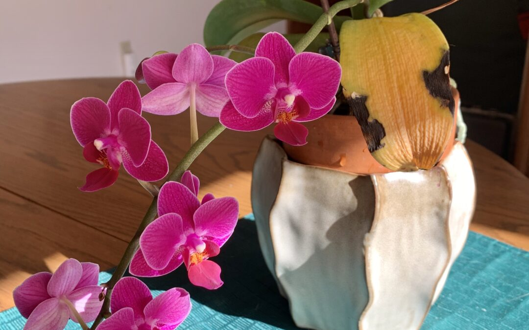 Life Lessons from an Orchid