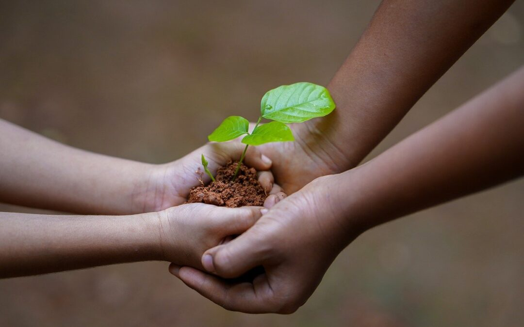Seeds of Healing, Seeds of Peace